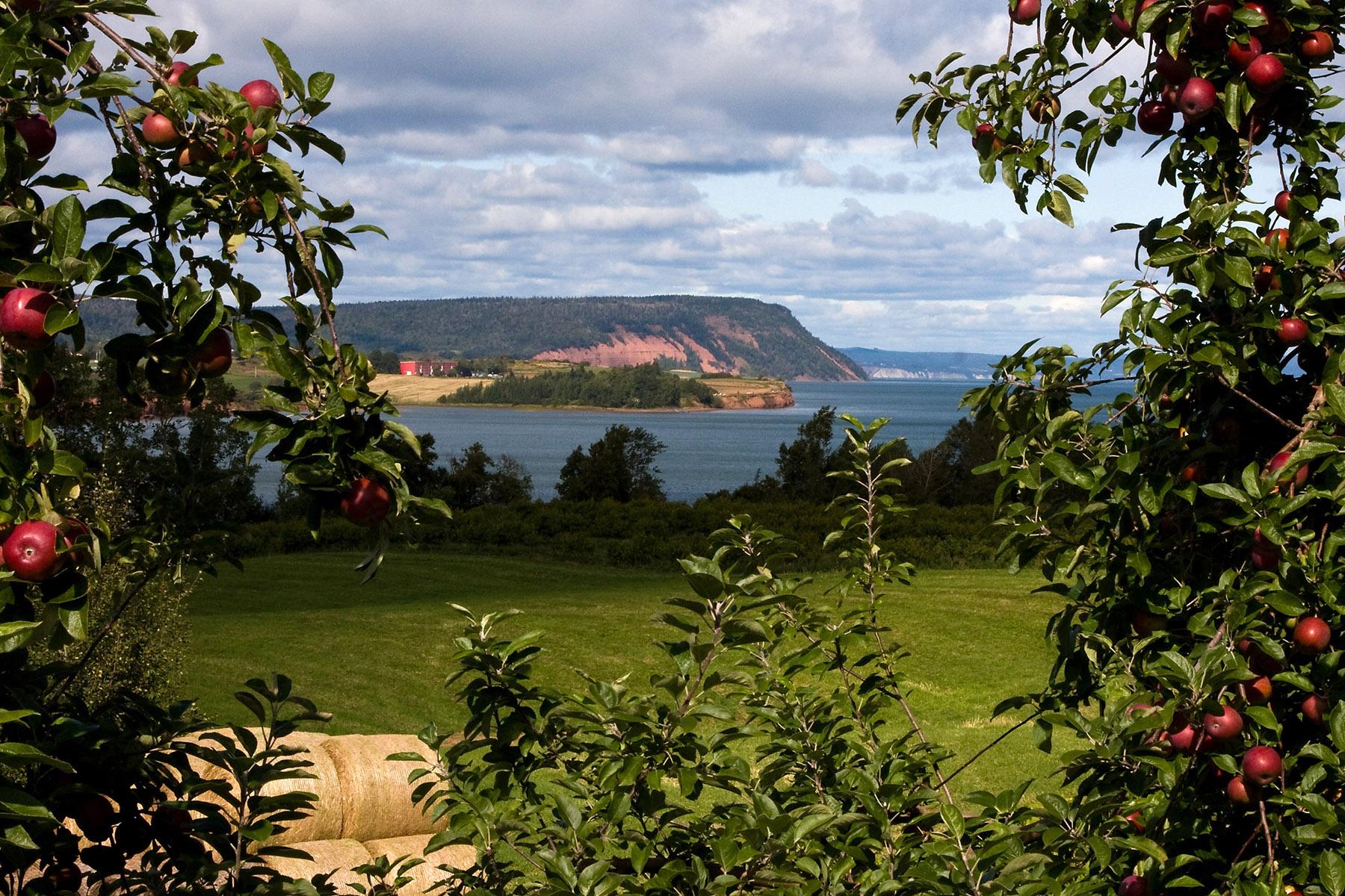 apple-orchard-and-landscape-in-nova-scotia-canada2